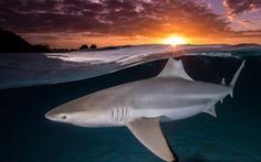 Ngắm biển xanh sâu thẳm và rực rỡ qua giải thưởng Nhiếp ảnh đại dương