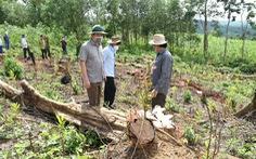 'Đốn rừng phòng hộ đầu nguồn để trồng keo': Điều tra có hay không người đứng sau
