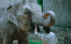 'Chúng tôi chia sẻ, để các con thú được tồn tại'