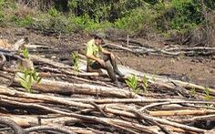 Phú Yên kiểm tra, xử lý toàn bộ các vụ phá rừng ở huyện Sơn Hòa
