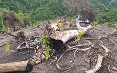Phú Yên làm rõ phản ảnh cán bộ, cựu lãnh đạo quản lý rừng liên quan đến các vụ phá rừng