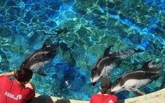 Lạc vào thế giới đại dương Vancouver Aquarium