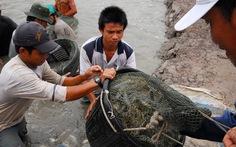 Việt Nam thắng trong vụ kiện tôm ở WTO