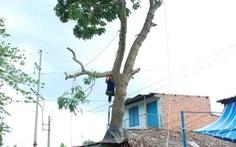 Đốn cây để tránh nguy hiểm cho dân