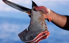 Chiến dịch bảo vệ cá mập