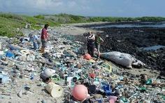 Ý bắt 54 người buôn lậu nhựa phế thải sang Đông Nam Á