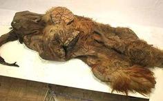 Tìm thấy xác voi ma mút còn nguyên vẹn