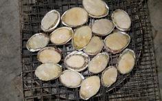 Ăn bào ngư ở Cù Lao Chàm