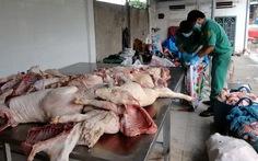 TP.HCM: tiêu hủy thịt heo thối và trên 5.000 con gà