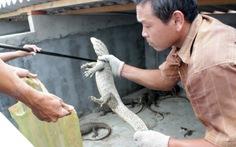 Thu tiền tỉ từ nghề nuôi rắn, kỳ đà, rùa
