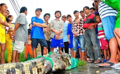 Hàng trăm cá sấu xổng chuồng, đã bắt 14 con