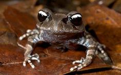 Những động vật kỳ lạ phát hiện tại Việt Nam