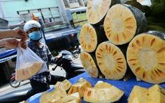 Đổ xô trồng mít Thái