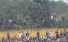 Trèo cây xem V-League