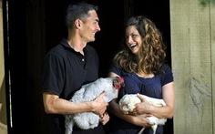 Dân Mỹ nuôi gà kiểng kiếm triệu USD/năm