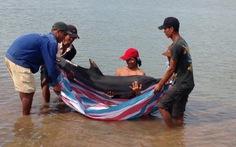 Thả cá heo mõm dài trở lại ra biển