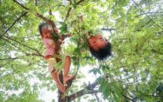 Ánh mắt trẻ thơ trên vòm cây trứng cá đèo Mang Yang