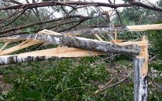 Bão số 11: người trồng cao su lại thiệt hại nặng