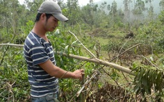 Bắt kẻ đâm chết người trong vụ tranh chấp đất rừng