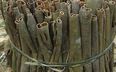Quế Trà Bồng - thơm nồng đặc sản quà tặng Việt Nam