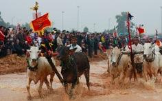 Mãn nhãn với hội đua bò Bảy Núi tại Hà Nội