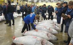 Xem đấu giá cá ngừ ở Tokyo