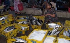 Ngư dân trúng đậm cá thu, cá ngừ