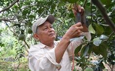 Nông dân Việt xuất ngoại dạy trồng bưởi