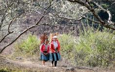 Hoa mận bung nở bạt ngàn trên bản làng Mộc Châu