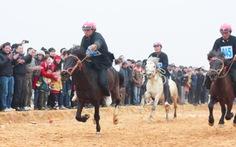 Mãn nhãn với đua ngựa Bắc Hà giữa lòng Hà Nội