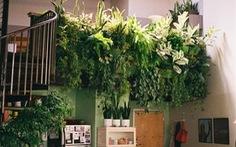 10 ý tưởng cho những khu vườn trong nhà