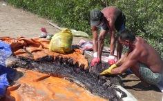 Phát hiện xác cá ông trên 1,5 tấn trên biển Bạc Liêu