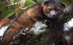 10 loài mới đặc sắc nhất 2014