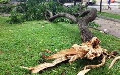 Chơi công viên, mẹ con bé 4 tuổi bị cây rơi bị thương