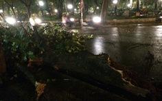 Hà Nội: Hàng loạt cây bật gốc, gãy rạp sau mưa giông
