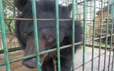Bàn giao một gấu nuôi cho trung tâm cứu hộ