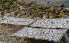 Ngon lắm cá cơm một nắng Cù Lao Chàm