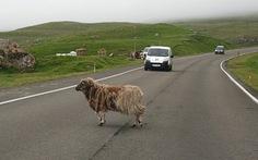 Thăm quần đảo Faroe xinh đẹp
