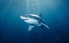 [Clip] Cáp quang biển bị cá mập cắn