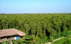 Cà Mau xả nước đập thủy lợi để cứu rừng U Minh Hạ