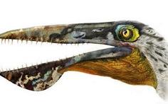 """Tìm thấy hóa thạch loài """"rồng bay"""" trong phim Avatar"""