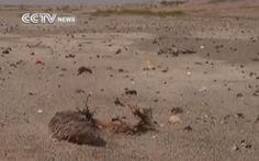 Hơn 500 con chim chết bí ẩn gần hồ nước Trung Quốc