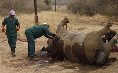 Nam Phi diễu hành kêu gọi bảo vệ động vật hoang dã