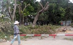 Bứng, đốn 63 cây xanh tại công viên Phú Lâm