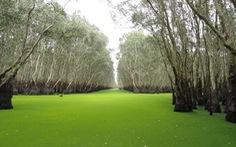 Rừng tràm Trà Sư sẽ trở thành khu du lịch sinh thái