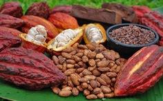 Flavanols trong cacao giúp cải thiện trí nhớ