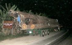 Bắt đoàn xe gỗ chở quá tải gấp 4 lần cho phép