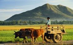 IFAD và ADB hỗ trợ phát triển nông thôn châu Á-Thái Bình Dương