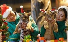 Thế giới rộn ràng đón Giáng sinh