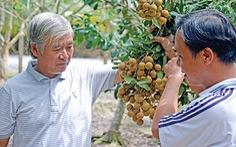 Niềm vui từ trồng nhãn xuất khẩu
